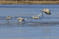 4 individual  Cranes together in takeoff mode (Not a composite)