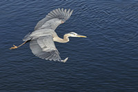 GBH Flying over water